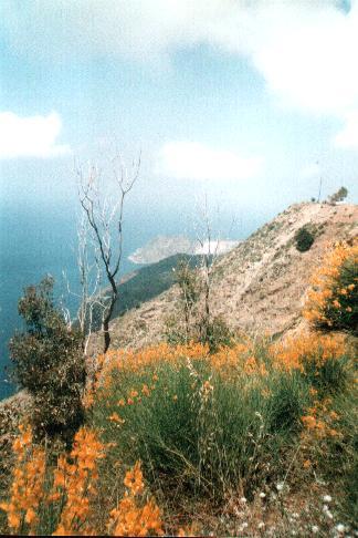 Platanos Crete Kreta