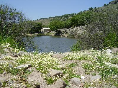 skalochori Lesbos