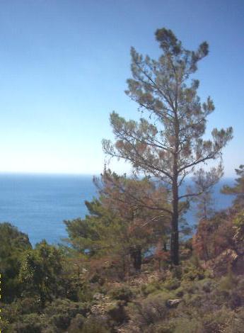 Blik vanaf een berg bij Sougia.