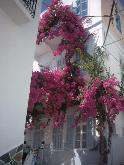 The bougainville filled streets of Ermoupolis