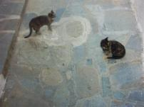 Pussycats in the streets of Mykonos town