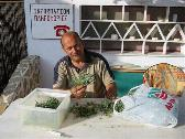 Ioannis is cleaning krimato, a herb that grows close to the sea....