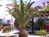 A palmtree in the garden of Anna's Rooms