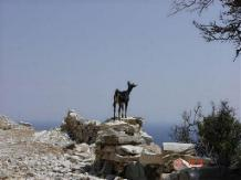 A goat on Tinos