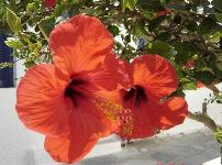A flower at a terrace at Anna's Rooms