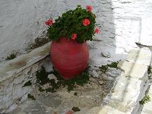 Flowers on Tinos