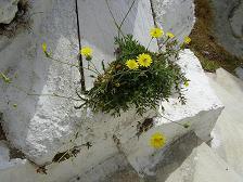 Straat in Tinos in Griekenland