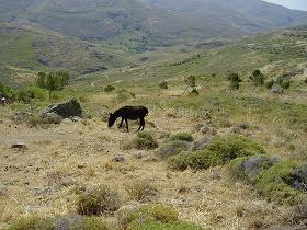 Versteende woud Lesbos