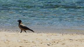 Iraklia, Agios Georgios beach