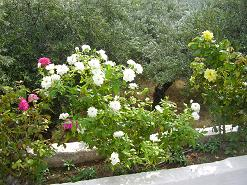 Zakros, Crete, Kreta.