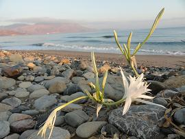 Livadia Beach, Kissamos, Kreta, Crete