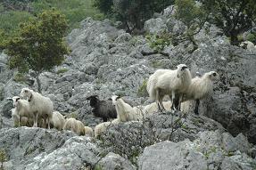 Deliana Gorge, Kreta, Crete.