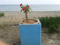 Stratos Restaurant, Kalamokanias beach - Analipsi, Makrigialos, Lasithi, Crete, Kreta