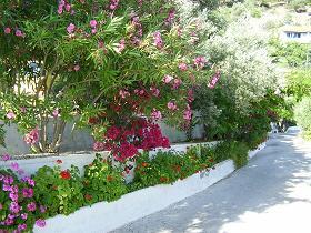 Samos, Psili Amos Beach near Limnionas