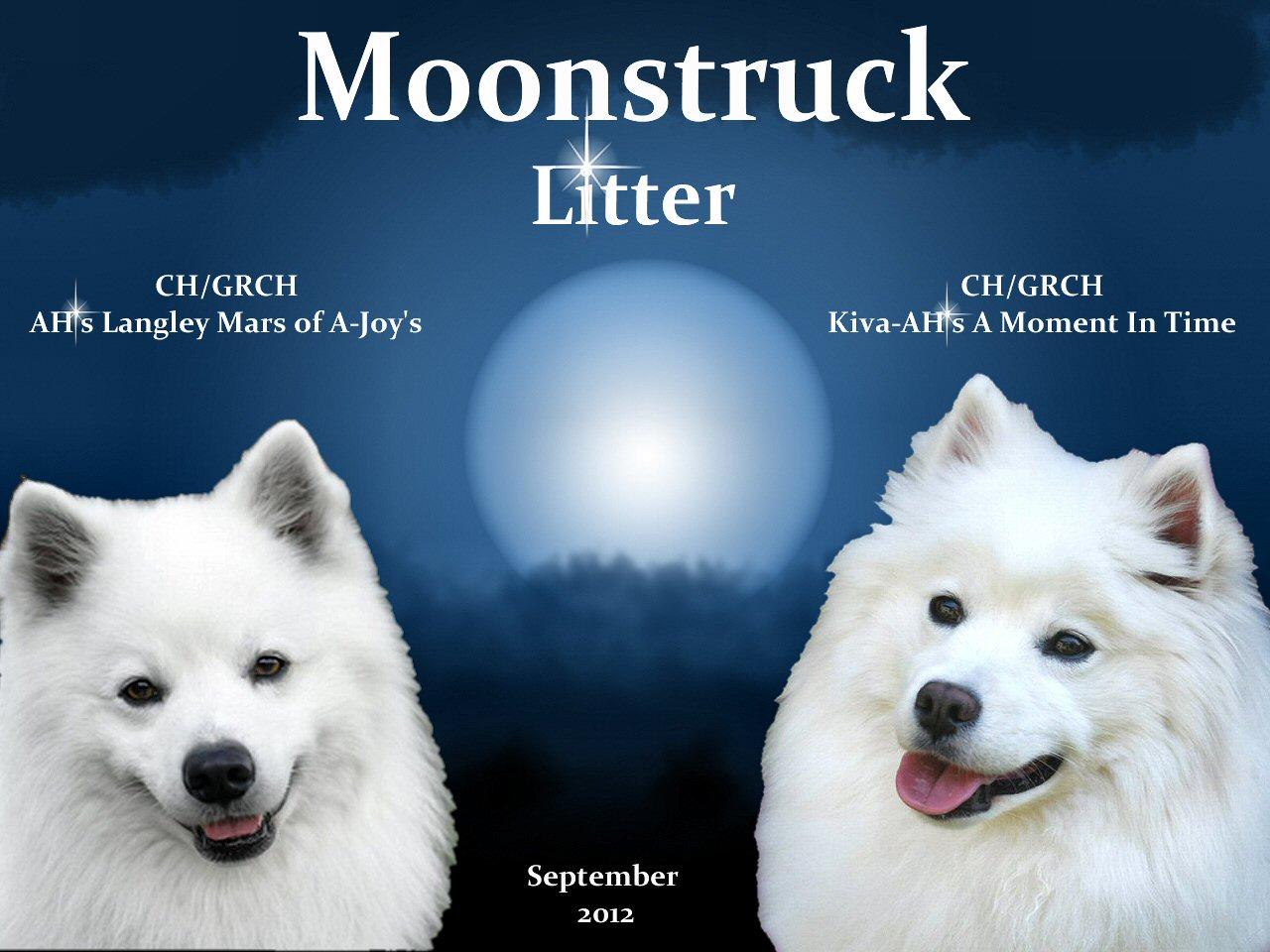 Moonstruck Litter 2012