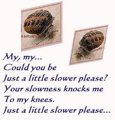 Snails moving slowly down sidewalk